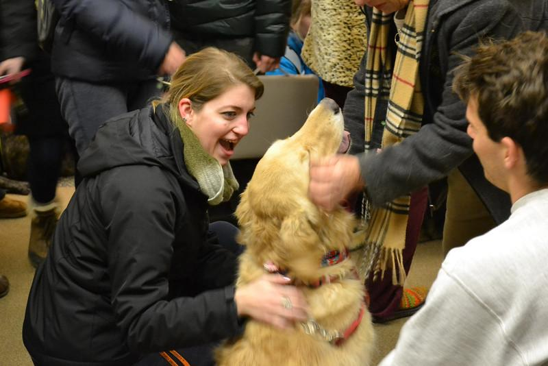 De-stressing: its a dogs life