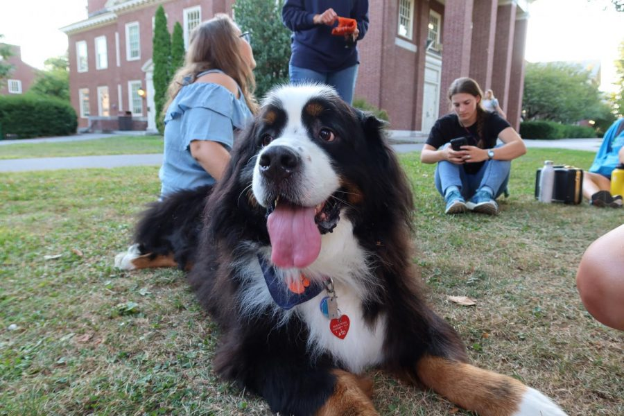 Therapy+dogs+visit+campus
